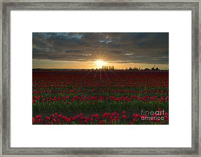 Sea Of Red Framed Print by Mike Dawson