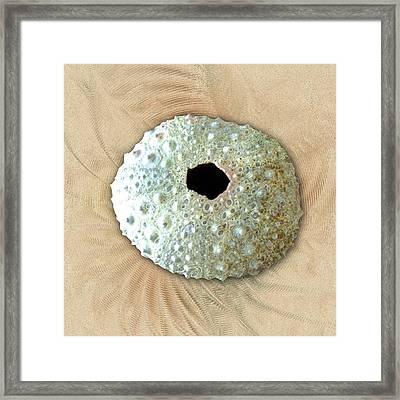 Framed Print featuring the photograph Sea Urchin by Anastasiya Malakhova