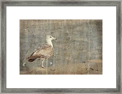 Seagull - Jersey Shore Framed Print