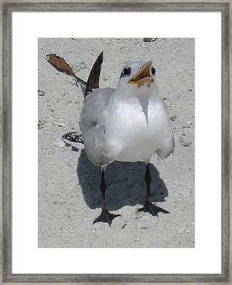 Seagull 2 Framed Print