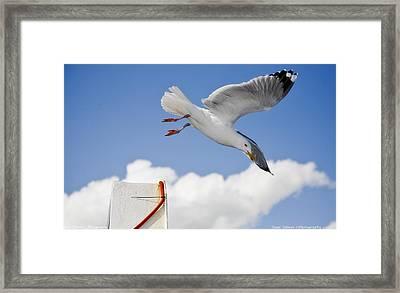 Seagull  Above Ferryboat Framed Print