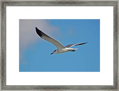 Framed Print featuring the photograph 1- Seagull by Joseph Keane