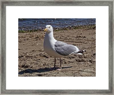 Seagull On Beach Framed Print