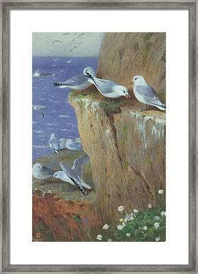 Seagulls Framed Print by Archibald Thorburn