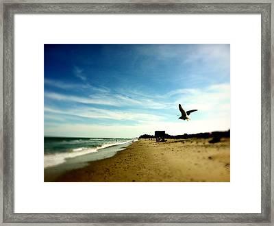 Seagulls At The Beach. Framed Print