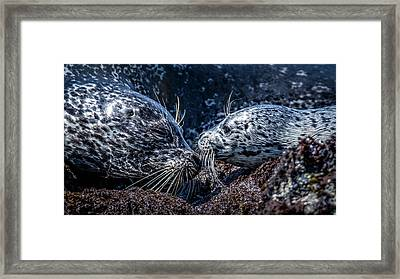 Seal Pup With Mom Framed Print