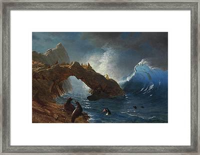 Seals On The Rocks Framed Print by Albert Bierstadt