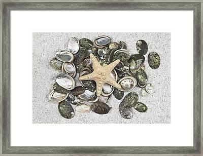Seashells Framed Print by Joana Kruse