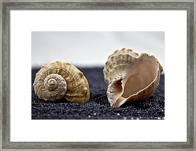 Seashells On Black Sand Framed Print