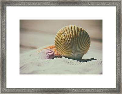 Seashore Shells Framed Print by Mountain Dreams