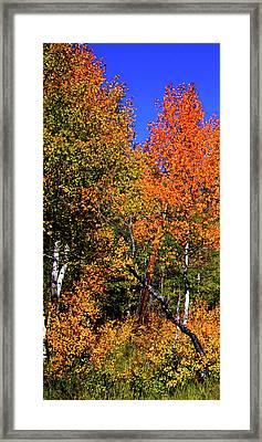 Set 54 - Image 1 Of 5 - 8 Inch W Framed Print