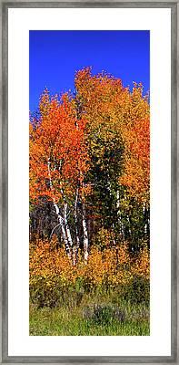 Set 54 - Image 2 Of 5 - 8 Inch W Framed Print