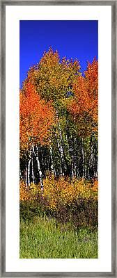 Set 54 - Image 3 Of 5 - 8 Inch W Framed Print