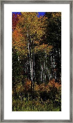 Set 54 - Image 5 Of 5 - 8 Inch W Framed Print