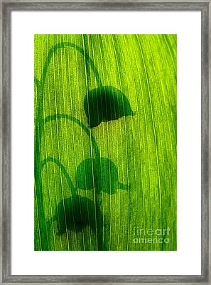Shadow Framed Print by Odon Czintos