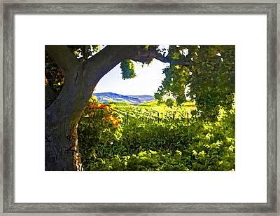 Shady Vineyard Framed Print by Patricia Stalter