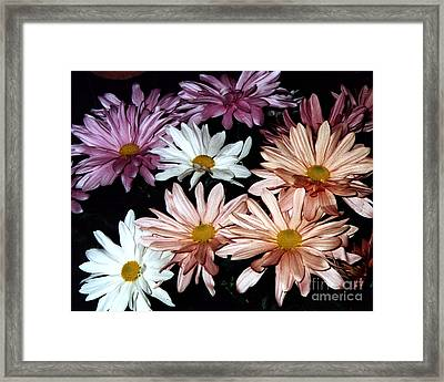 Framed Print featuring the photograph Shasta Daisies by Merton Allen