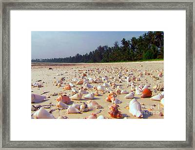 She Sells Sea Shells At The Sea Shore Seaweed And Sea Shells Beaches Of Zanzibar Tanzania Framed Print