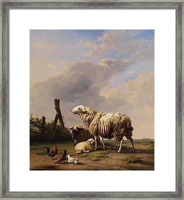 Sheep Framed Print by Eugene Verboeckhoven