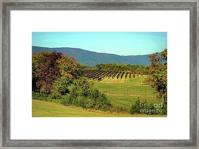 Shenandoah Vineyard Framed Print
