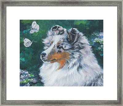 Shetland Sheepdog Framed Print by Lee Ann Shepard