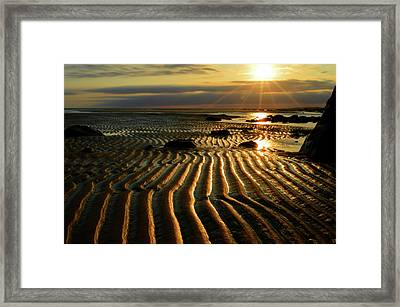 Shine On  Framed Print by Dianne Cowen