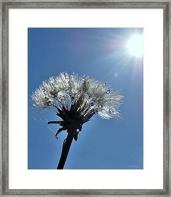 Framed Print featuring the photograph Shining by Marija Djedovic