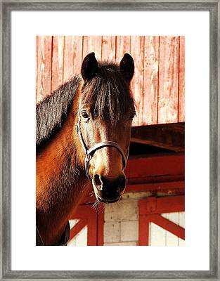 Show And Tell Framed Print by JAMART Photography