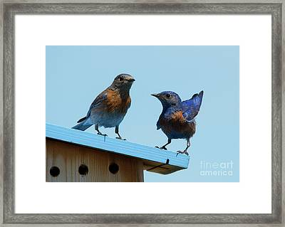 Showing Off Framed Print by Mike Dawson