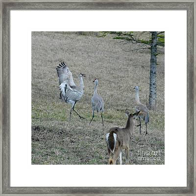 Showing Off Framed Print by Sandra Updyke