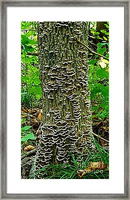 Shrooms Framed Print