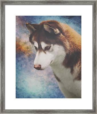 Siberian Husky Portrait 2 Framed Print
