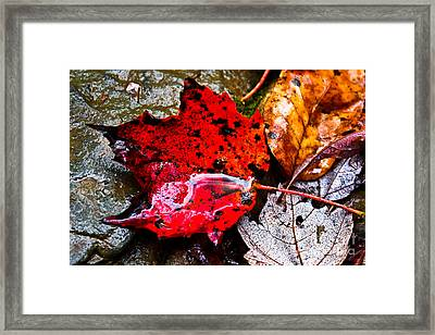 Signs Of Autumn Framed Print by Everett Houser
