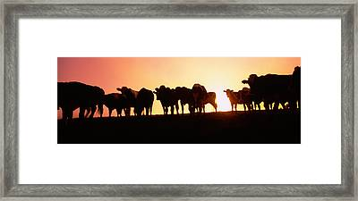 Silhouette Of Cows At Sunset, Point Framed Print
