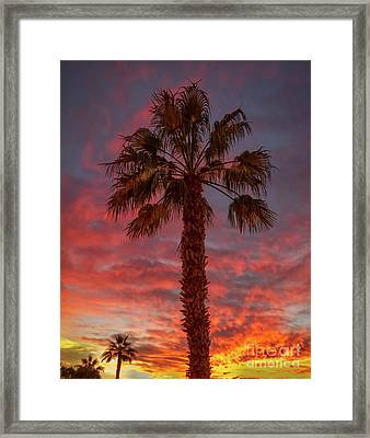 Silhouetted Palm Tree Framed Print by Robert Bales