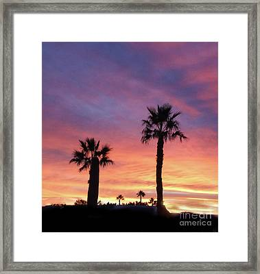 Silhouetted Palm Trees Framed Print by Robert Bales