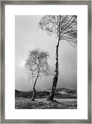 Silver Birch - Monochrome Framed Print