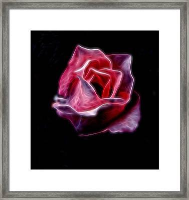 Single Pink Rose Framed Print