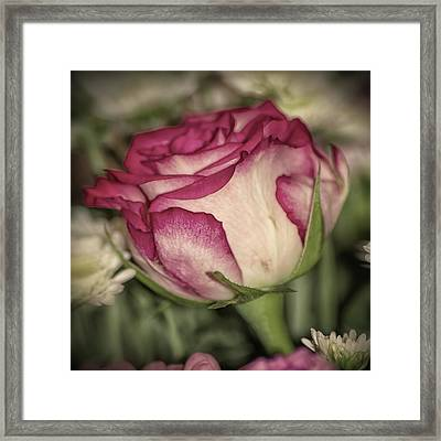 Single Rose Framed Print by Martin Newman