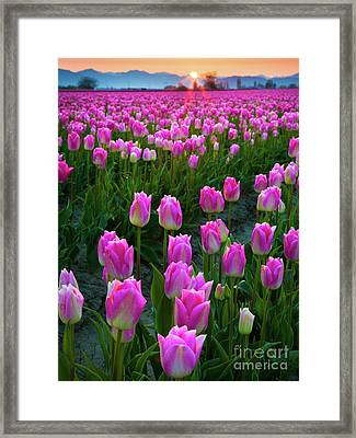 Skagit Valley Dawn Framed Print by Inge Johnsson