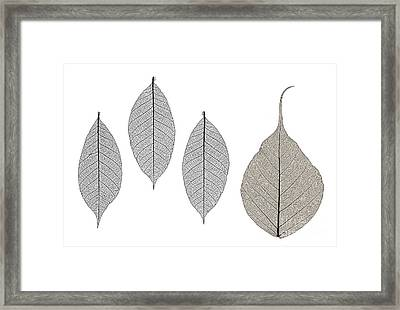 Skeleton Leaves Framed Print by Janet Burdon