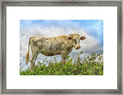 Skinny But Happy Framed Print by Patricia Hofmeester
