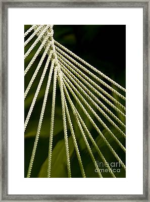 Sleep Catcher Framed Print by Shawn Young