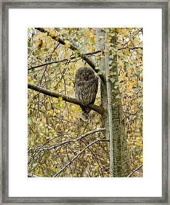 Sleeping Owl Framed Print by Vern Minard