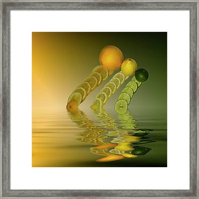 Slices  Grapefruit Lemon Lime Citrus Fruit Framed Print by David French