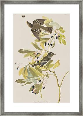 Small Green Crested Flycatcher Framed Print by John James Audubon