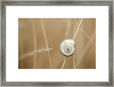 Snail On Autum Grass Blade Framed Print