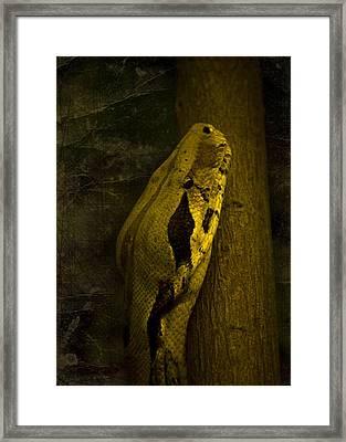 Snake Framed Print by Svetlana Sewell