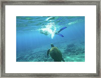 Snorkeler Female Sea Turtle Framed Print