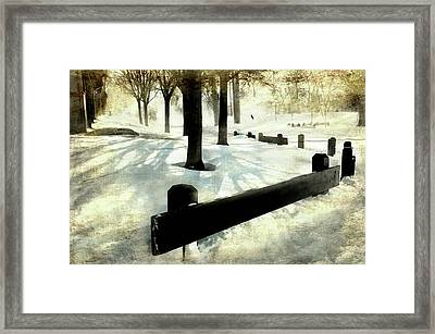 Snow Bird Framed Print by Diana Angstadt